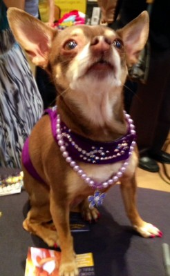 Stylish Pets at BlogPaws 2014